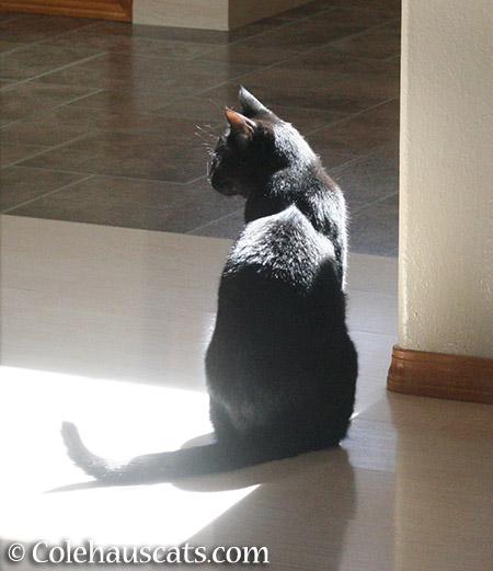 Olivia, a sunshiny girl - 2015 © Colehauscats.com