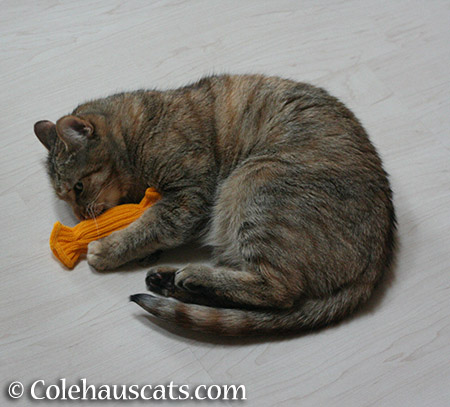 Toy playing step 5 - 2015 © Colehauscats.com