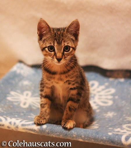 Viola, December 2013 - 2015 © Colehauscats.com
