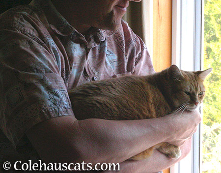 MamaCat Zuzu and her Dad - 2015 © Colehauscats.com