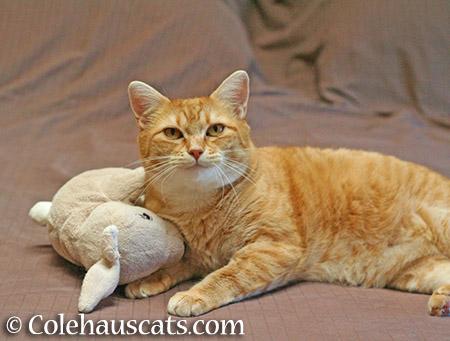 A special toy, Zuzu's Snuggle Bunny - 2015 © Colehauscats.com