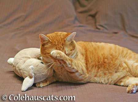 Aww, she's shy about her bunny - 2015 © Colehauscats.com