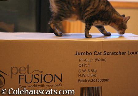 Checking the box - 2015 © Colehauscats.com