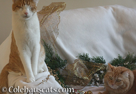Not quite holiday card material, Quint and Pia - 2015 © Colehauscats.com