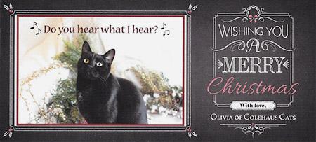 Olivia's Christmas Card - 2015 © Colehauscats.com
