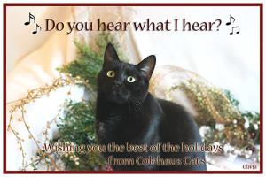Olivia's e-Christmas Card - 2015 © Colehauscats.com