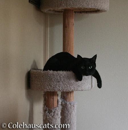 Dangling - 2015 © Colehauscats.com