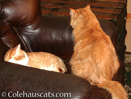 Quint and Pia - 2015 © Colehauscats.com