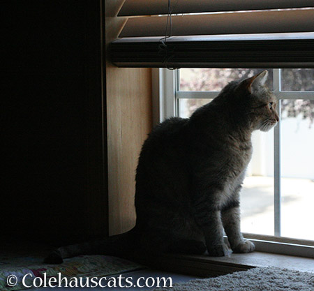 Watching the weather - 2015 © Colehauscats.com