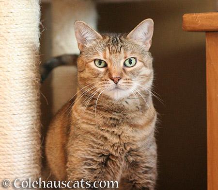Ruby has a skeptical - 2015 © Colehauscats.com