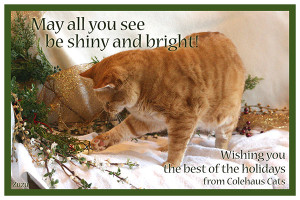 Zuzu's e-Christmas card - 2015 © Colehauscats.com