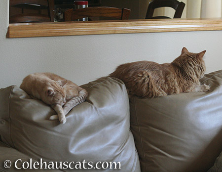 It's the girls couch. Obviously. - 2015 © Colehauscats.com