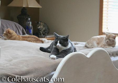 Zuzu, Viola, Tessa, and Miss Newton - 2015 © Colehauscats.com