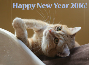 Zuzu wishes you a very happy 2016! - 2016 © Colehauscats.com