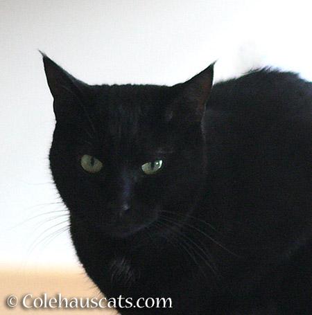 Olivia says... 2015 © Colehauscats.com