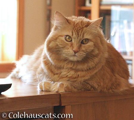 Pia sighs - 2015 - © Colehauscats.com