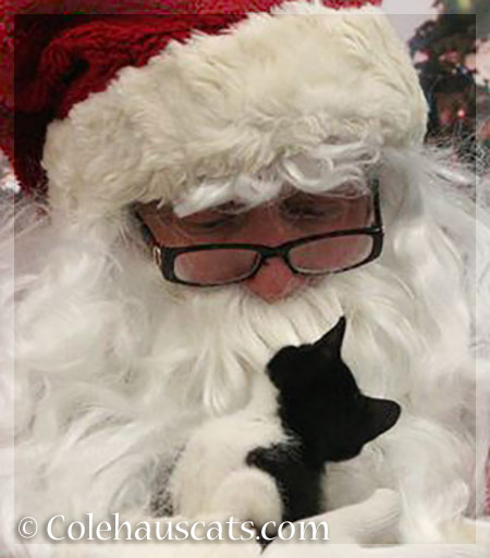 Santa's little helper - 2013-2015 © Colehauscats.com