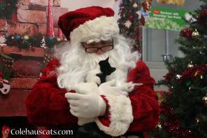 Santa and his little helper - 2013-2015 © Colehauscats.com