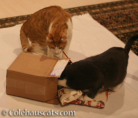 Package open! - 2015 © Colehauscats.com