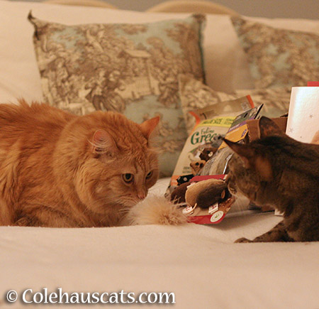 Pia and Viola showdown over feather mice - 2015 © Colehauscats.com