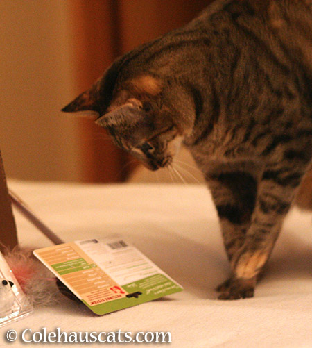 Looking at ingredient list - 2015 © Colehauscats.com