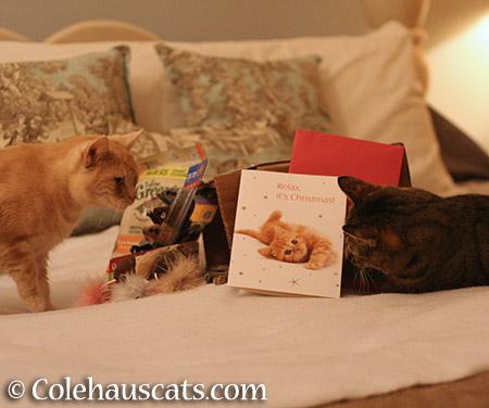 Miss Newton surveys the goods - 2015 © Colehauscats.com