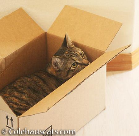 Pick this box, mom! - 2015 - © Colehauscats.com