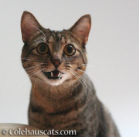 Viola says... - 2015 - © Colehauscats.com