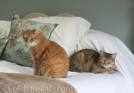 New friends Zuzu and Ruby - 2016 © Colehauscats.com