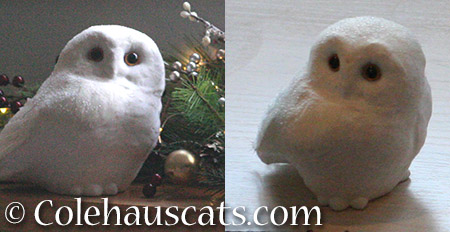 The Snowy Owl is to blame - 2015 © Colehauscats.com