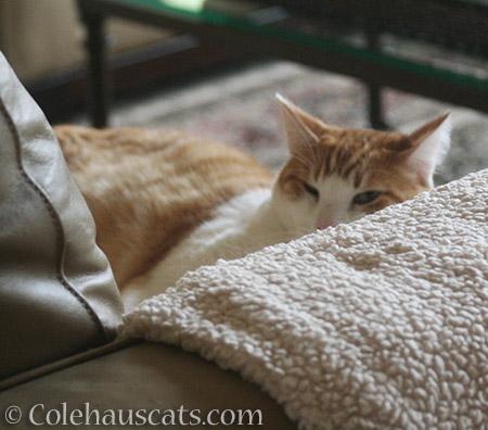 Winter Napping - 2016 © Colehauscats.com