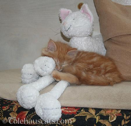 Big naps for little Pia - 2012-2016 © Colehauscats.com
