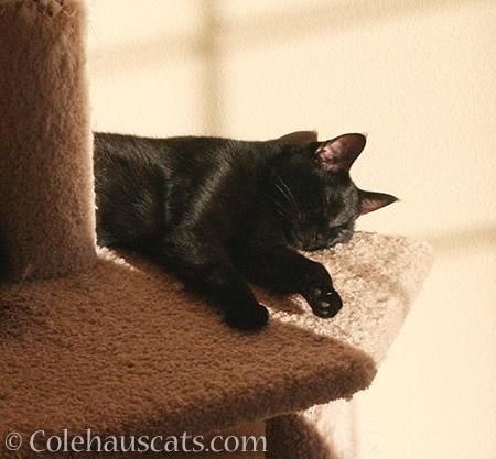 Sweet Olivia naps - 2016 © Colehauscats.com