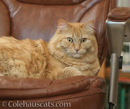 Pia's good life - 2016 © Colehauscats.com