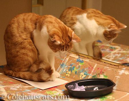 Checking out paint color - 2016 © Colehauscats.com