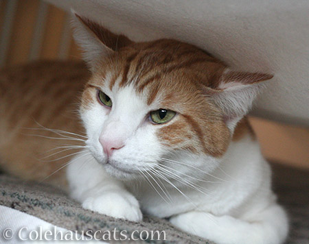 Quint's Secret Lair - 2016 © Colehauscats.com