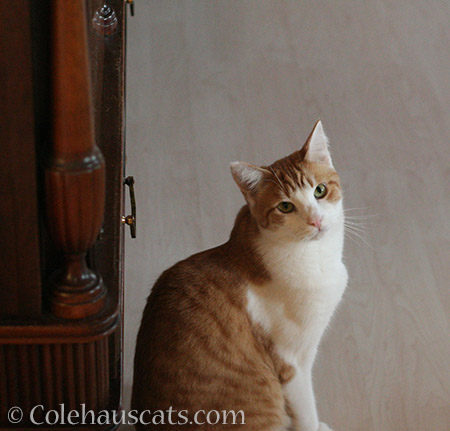 Questioning - 2016 © Colehauscats.com