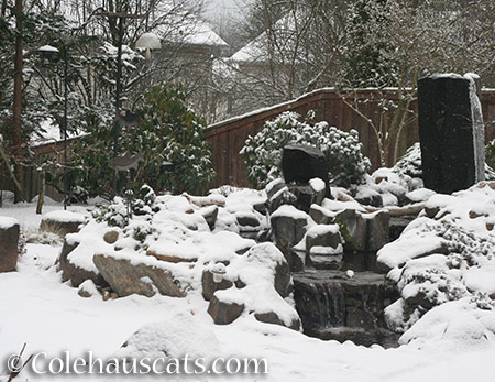 Snow Day! - Jan 3, 2015 © Colehauscats.com