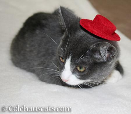 Tessa's Red Hat - 2012-2016 © Colehauscats.com