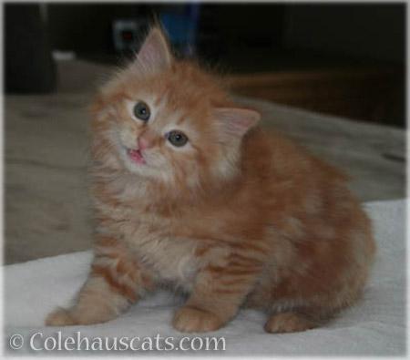 Pia's First Colehaus Cats photo - 2012-2016 © Colehauscats.com