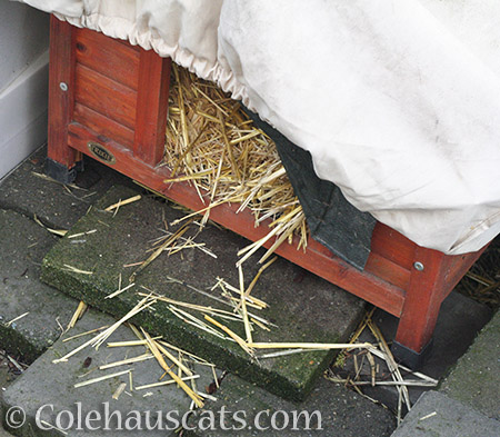 Fresh straw for all the houses! - 2016 © Colehauscats.com