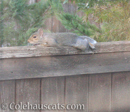 Lounging Squirrel - 2016 © Colehauscats.com