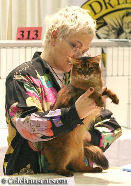 Summer at the Int'l Cat Show in Portland - 2016 © Colehauscats.com