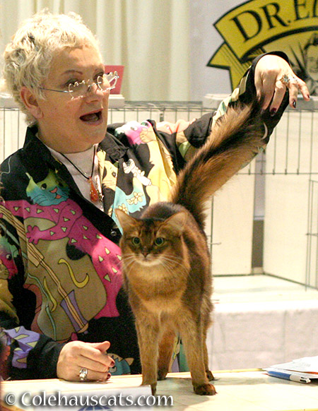 This judge liked Summer at the Int'l Cat Show in Portland - 2016 © Colehauscats.com