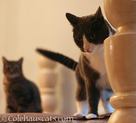 Tessa's annoyance over Viola - 2016 © Colehauscats.com