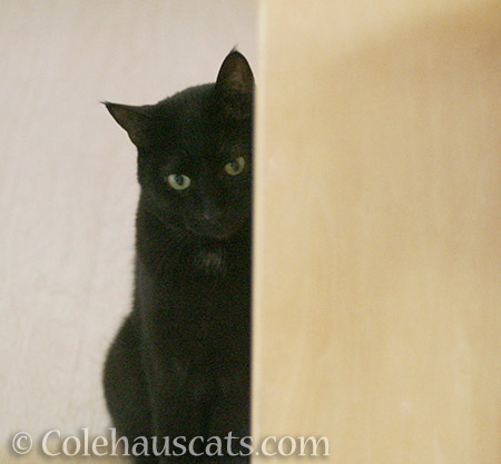 Olivia spies - 2016 © Colehauscats.com