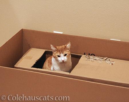 Quint in a box in a box - 2016 © Colehauscats.com