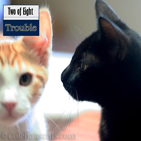 Quint and Olivia - 2012-2016 © Colehauscats.com