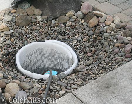 Fountain pump well - 2016 © Colehaus.com and Colehauscats.com