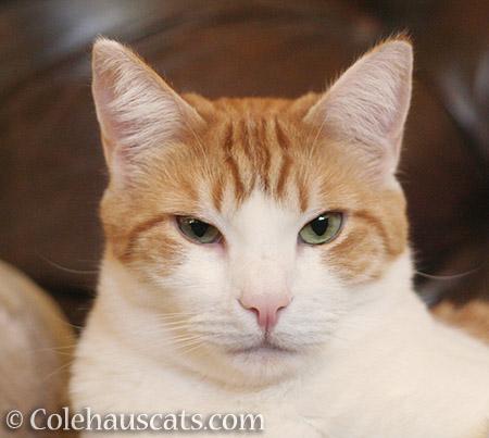 Grumpy Quint - 2016 © Colehauscats.com